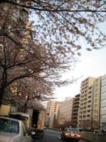 IMG_0013sakura.JPG