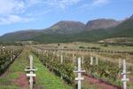 winearykujyu3.jpg